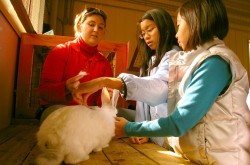 A female museum guide supervises two young students, who are reaching out to stroke a large, white rabbit on the table in front of them.